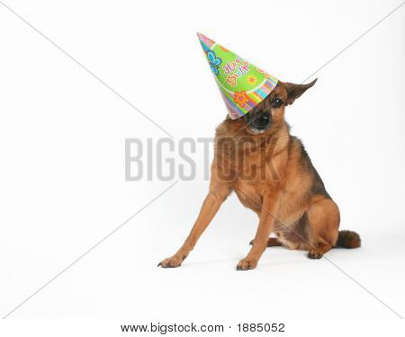 a chihuahua mix with a birthday hat on poster