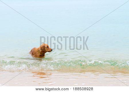 Dog Swims In The Sea Near The Sandy Shore