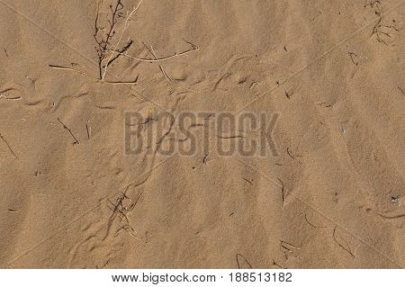 Sand of the desert with snake footprints