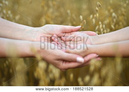 Mother holding childrens hands in her palms with blurred wheat field on background