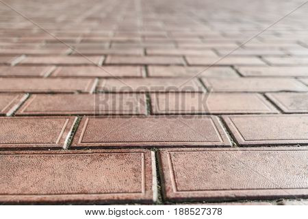 Clay Pavers-colour Red With Moss In The Seams In The Future