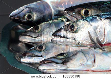 Fresh raw mackerels on a pewter dish