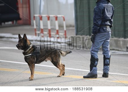 Dog Canine Unit Of The Police And A Police Officer In Uniform