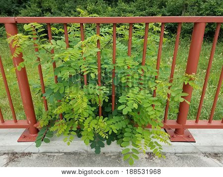 red metal railing with green plant growing through bars