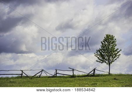 lonely tree near the wooden fence in the field