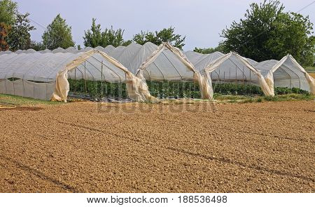 Greenhouses For The Cultivation Of Vegetables In The Winter And