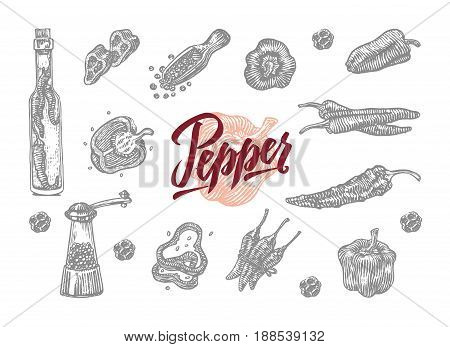 Gray engraved bell and chili pepper icon set in different shapes and adaptation vector illustration