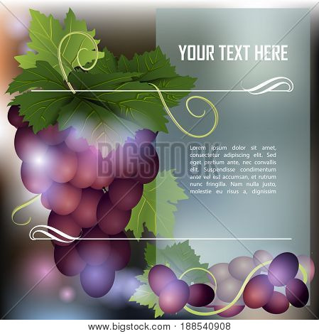 Bunch of dark grapes.Ripe grape. Place for text. Vector illustration