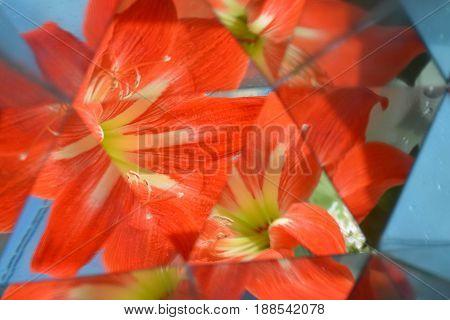 Abstract background,  beautiful flowers, nature, kaleidoscope effect