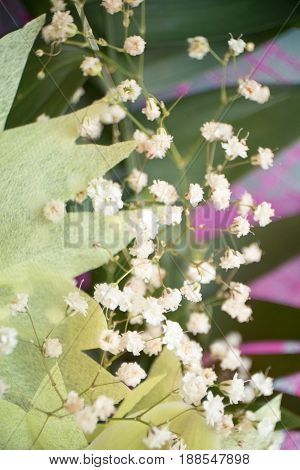 gypsophila (small white flowers for decoration) the bouquet of orchids closeup on wooden background concept birthday flowers gift