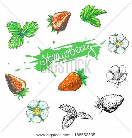 Hand drawn vector illustration set of color and monochrome strawberry, flower, leaf. sketch. Vector eps 8