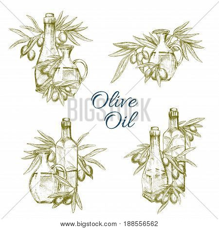 Olive oil and olives vector sketch. Set of bottles, jars and pitchers with extra virgin oil for product labels design or farm market of green and black olive fruits on branches