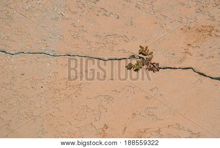 horizontal shot of grass growing in cracked brown concrete