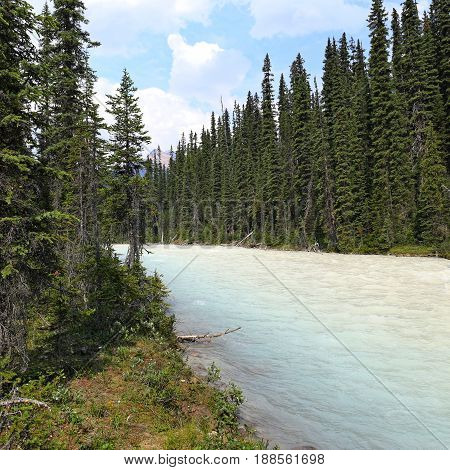 Whitecolored Kiking Horse River in Yoho NP