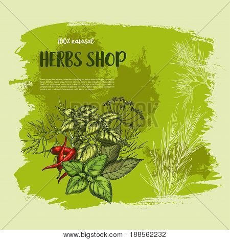 Herbs shop poster design. Vector natural organic spices of chili pepper and oregano or green basil, dill seasoning and thyme or cumin flavoring, sage or bay leaf for culinary herbal dressing