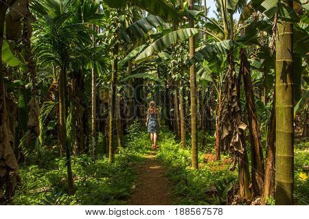 Young woman in the jungle in tropical spice plantation Goa India.