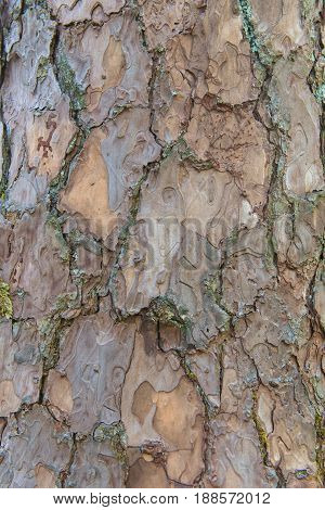 Tree Bark Texture Pattern For Background