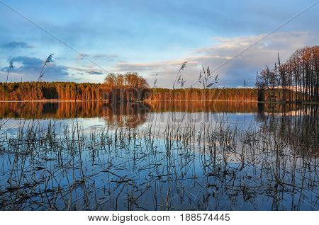 Natural Landscape. Bulrush On The Lake With A Little Island In The Middle At Sunset, Clouds Reflecti