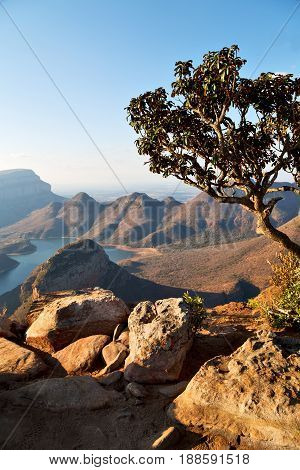 In  South Africa    River Canyon  Plant  And Water