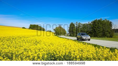 NANDLSTADT GERMANY - MAY 6 2017 : A view of yellow flowering rapeseed fields in spring with a car driving down the country road in Nandlstadt Germany. Rapeseed is grown for the production of animal feeds vegetable oils and biodiesel.