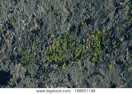 Rock and moss texture and background. Mossy stone background. Abstract texture and background for designers. Mossy stone texture. Closeup view of moss and rocks.
