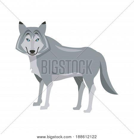 portrait of wolf. husky animal wildlife vector illustration