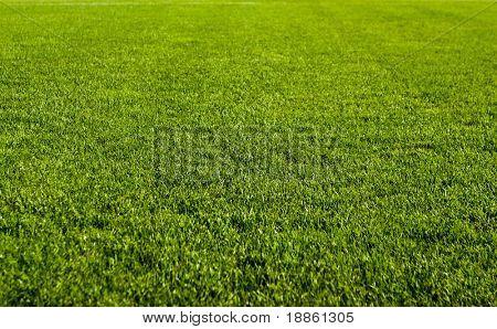 Nice green grass texture form a soccer field
