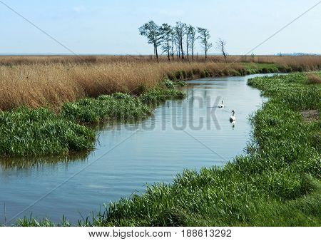 swans swim on the river the canal stretching into the Bay the river flows into Zatoka