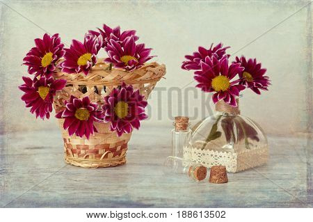 Chrysanthemum in basket on wooden table. Still life with chrysanthemums.
