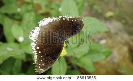 Closeup butterfly on flower ,butterfly and flower,butterfly on a flower blurry background,butterfly on flower,butterfly on flower in garden or in nature