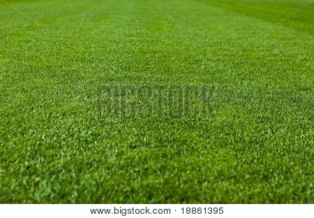 Green grass with shallow depth of field in a soccer field