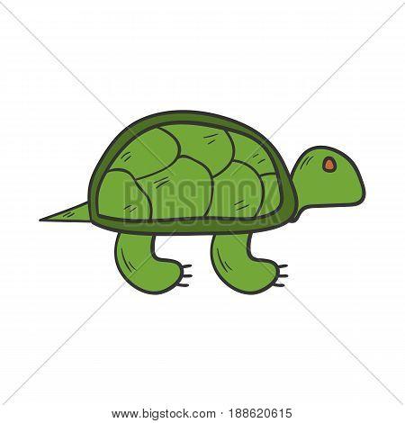 Vector Cartoon Hand Drawn Green Turtle