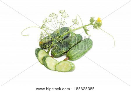 Several whole fresh cucumbers one sliced cucumber stalk of the cucumber with leaves tendrils and flowers and inflorescence of dill on a light background
