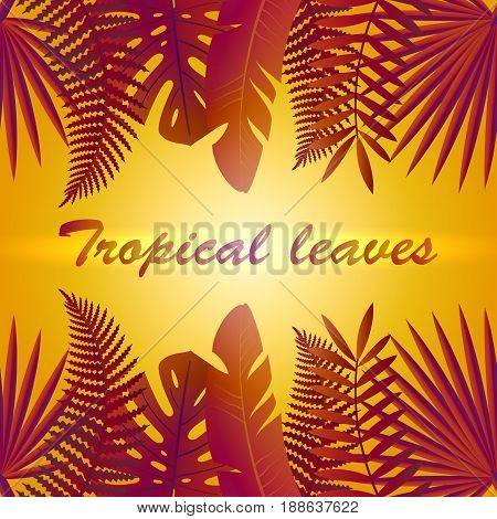 Tropic leaves background. Tropical foliage. Floral design. Summer composition with tropical leaves, heat, sunset.