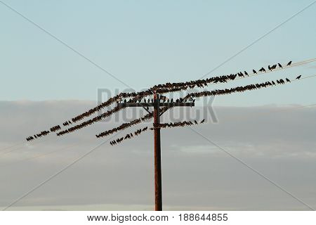 Birds on a Telegraph Wire in Nevada