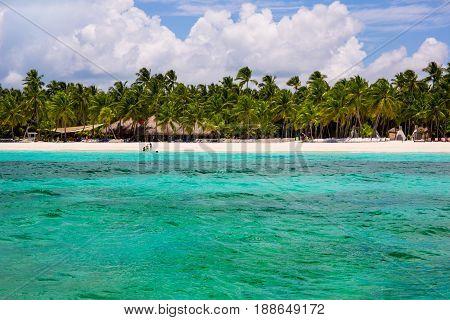 Palms coastline on caribbean beach, Island Saona.
