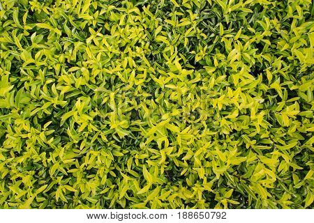 Natural Green Leaf Background/natural Green Background