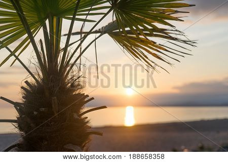 palm tree at sunset which occurs over a calm sea
