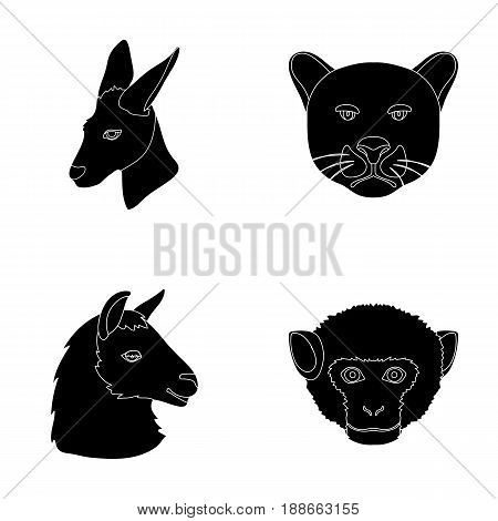 Kangaroos, llama, monkey, panther, Realistic animals set collection icons in black style vector symbol stock illustration .
