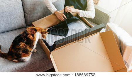 Cat helping young beautiful woman on living room sofa looks happy as she unpacks unbox cardboard box parcel containing new beautiful fashion clothes