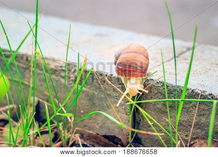 Small inhabitants of nature around us the snail creeps towards the green grass
