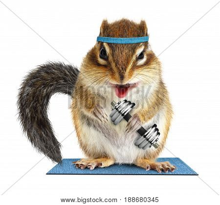 Funny fitness animal chipmunk lifting dumbbell on white