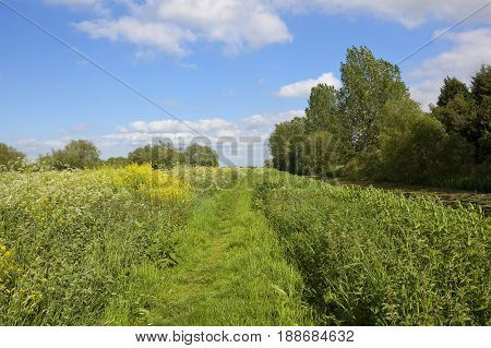 Grassy Towpath In Summer