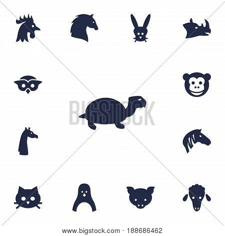 Set Of 13 Alive Icons Set.Collection Of Bunny, Ape, Lamb And Other Elements.