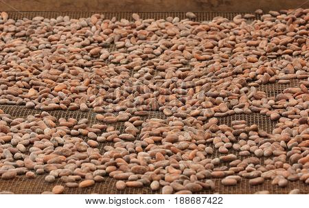 Drying of cocoa beans, Sao Tome and Principe, Africa