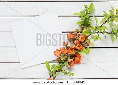 Scrapbook page of wedding or family photo album frame with red Chaenomeles japonica flowers and green leaves on white wooden background; top view flat lay overhead view