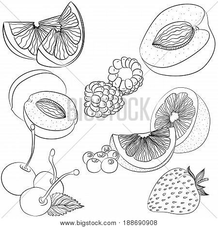 Vector line art illustration with food. Set with various fruits and berries. Illustration for menu cookbook or coloring book. Sketch isolated on white background