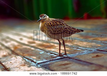 Weakened Bird Flight Sea And Sat On Deck Of Ship.