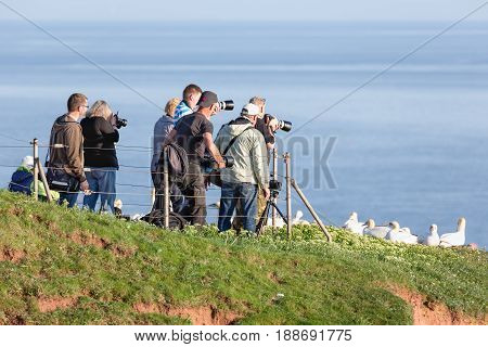 HELGOLAND GERMANY - MAY 27 2017: Photographers taking pictures of brooding Northern Gannets at red cliffs of Helgoland