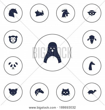 Set Of 13 Zoology Icons Set.Collection Of Steed, Camelopard, Hog And Other Elements.